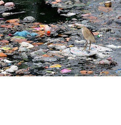 Bird perched on a very polluted stretch of water